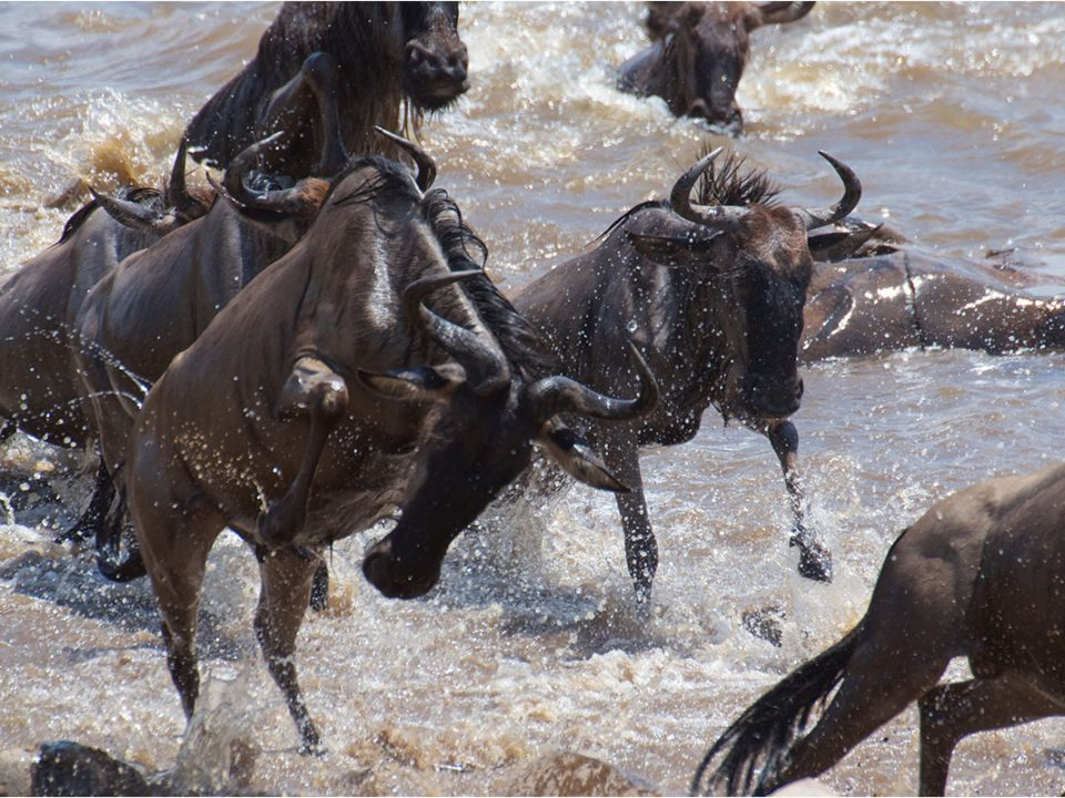 10 days Tanznaia wildebeest migration and Zanibar beach holiday