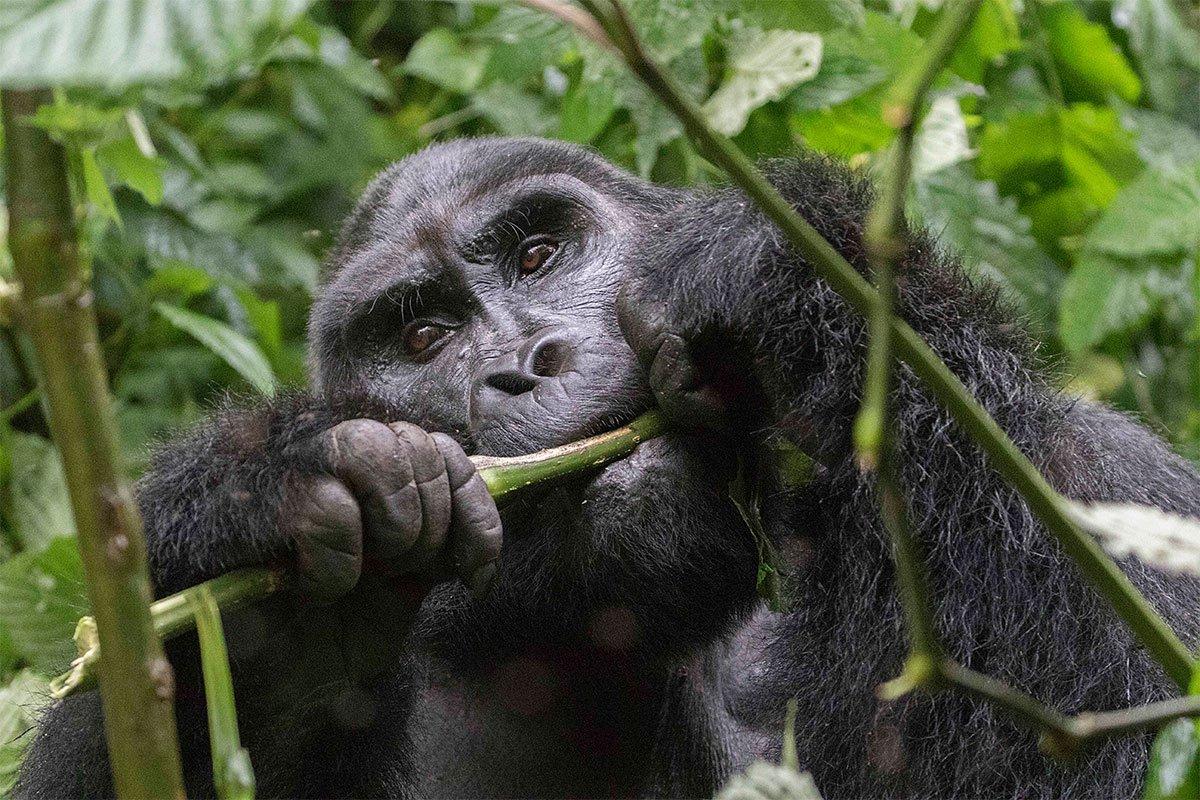 15 days budget Uganda Rwanda, Tanzania and Kenya safari