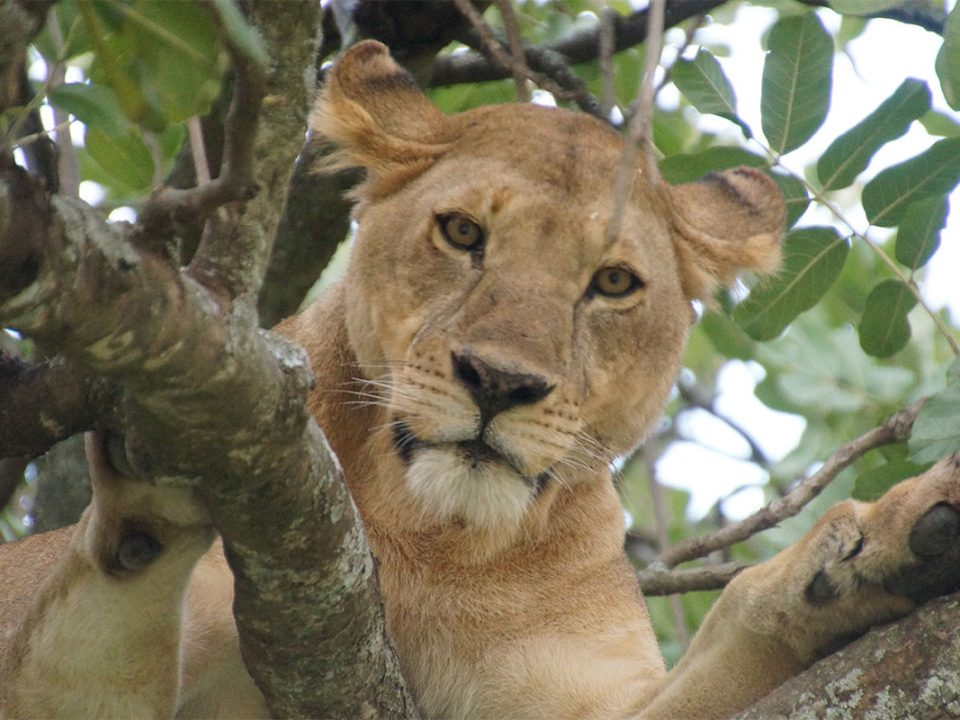 2 Days Ngorongoro crater and Lake Manyara safari