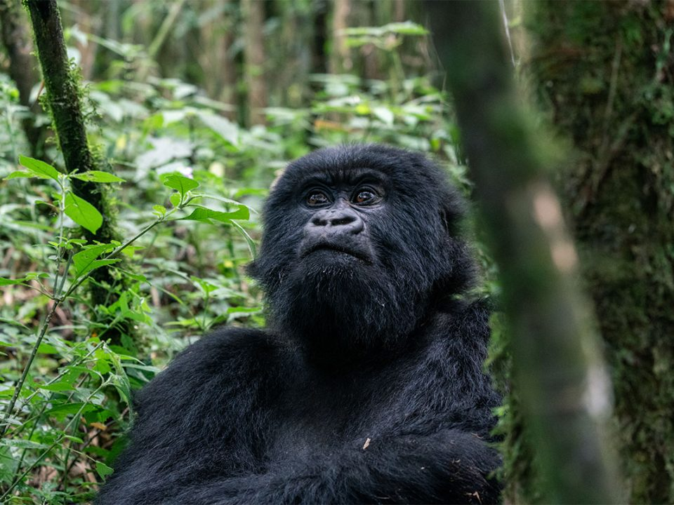 3 days fly from Entebbe to Bwindi