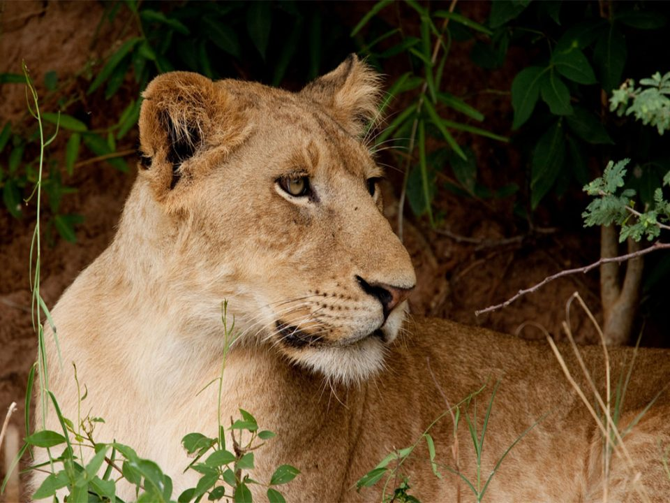 4 days big five safari in Murchison falls