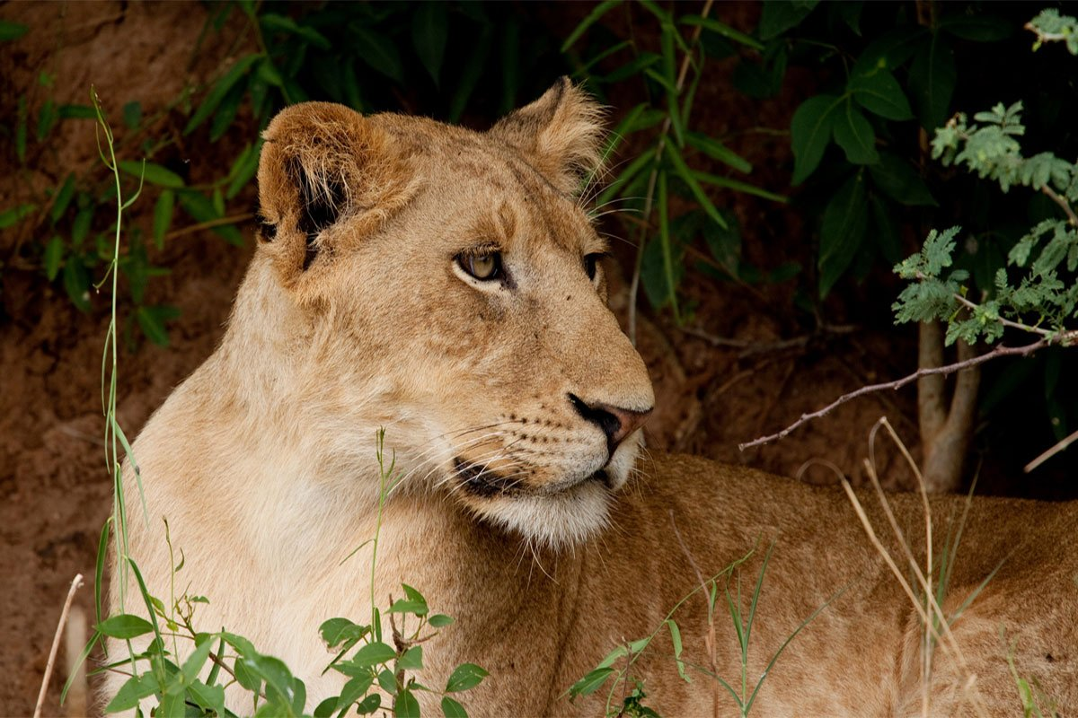 4 days big five safari in Murchison falls