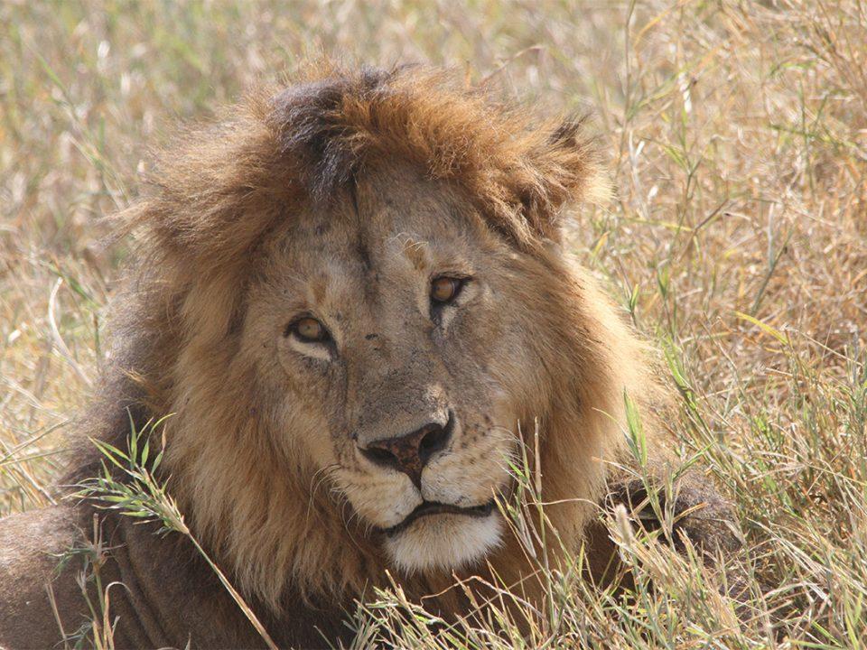 4 Days Kidepo valley National park wildlife safari