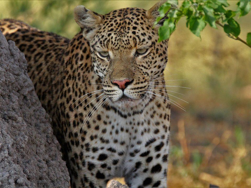 4 days Kenya Masai Mara safari