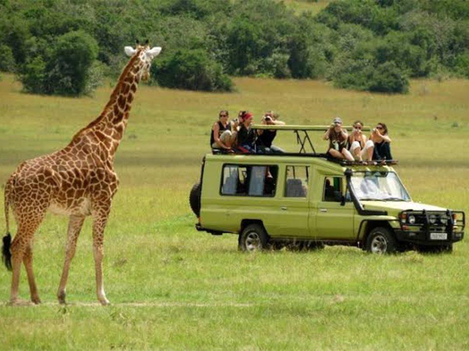 4 days Tanzania luxury lodge safari