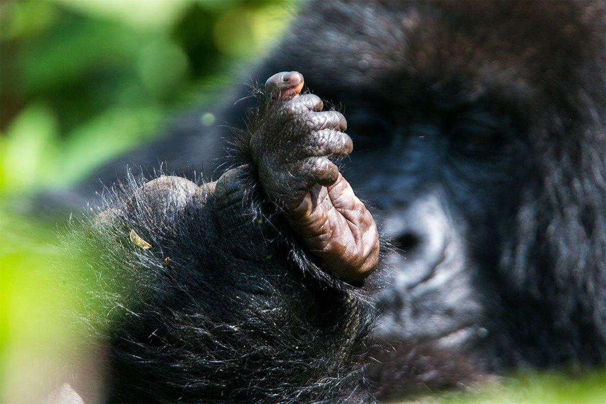 4 days gorilla and sabinyo volcano hike
