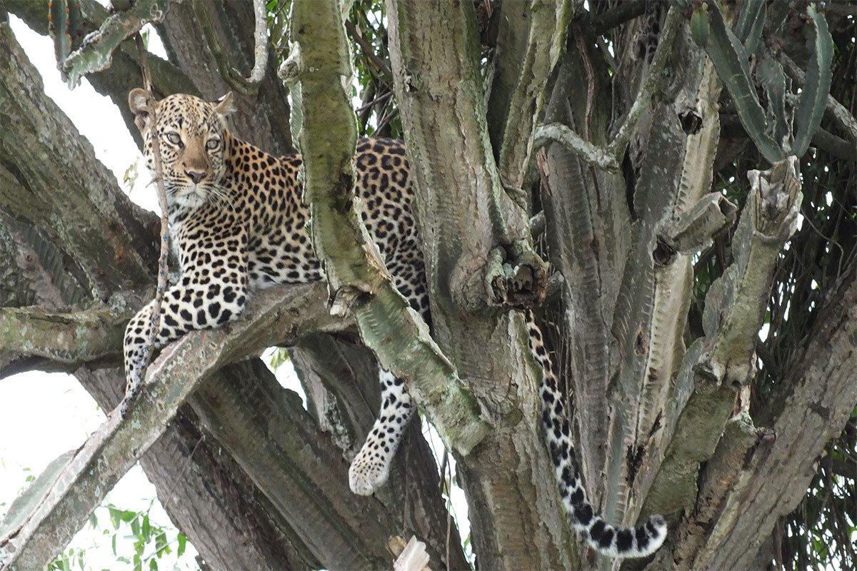 5 days Queen Elizabeth & tree climbing lions