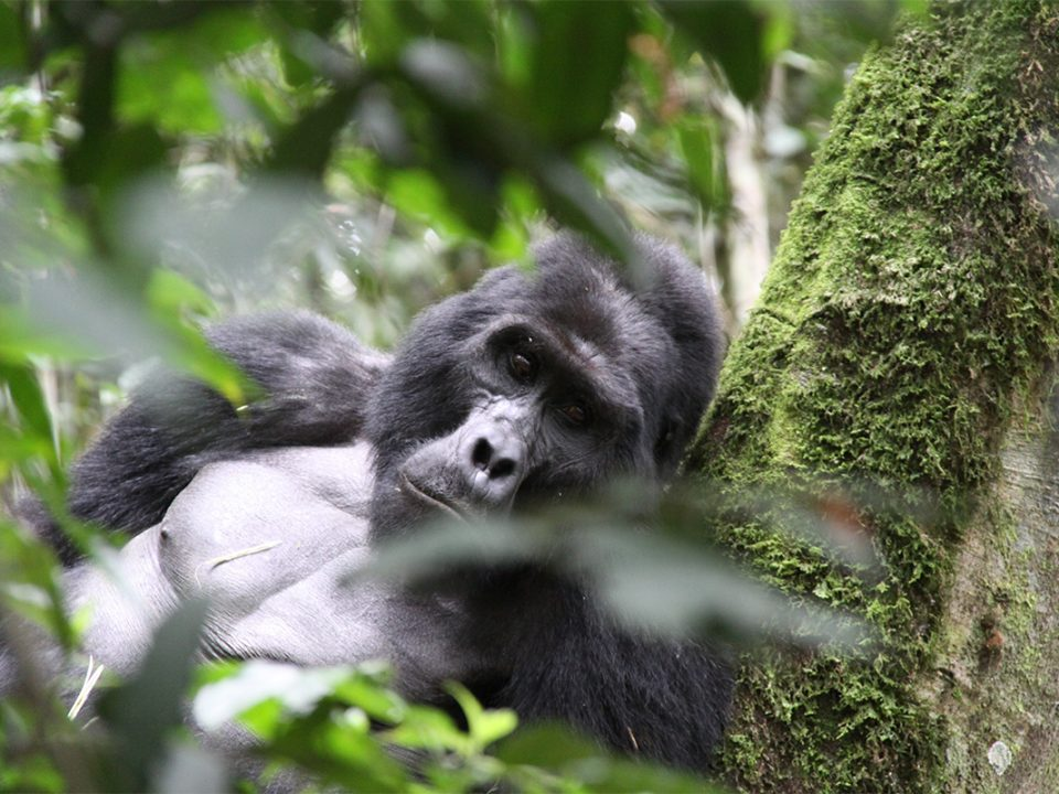5 days Uganda gorillas