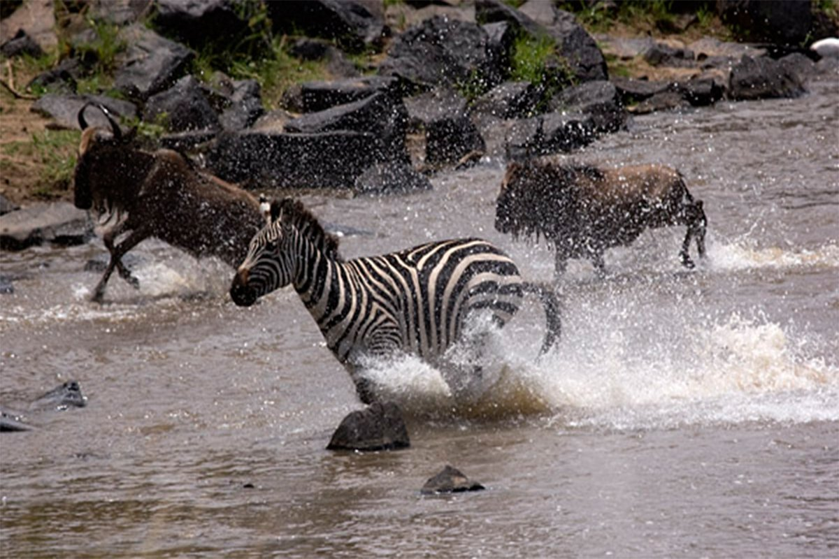 5 days Masai Mara and Lake Nakuru safari