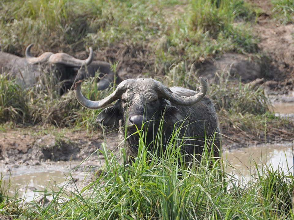 Murchison falls safari for 5 days