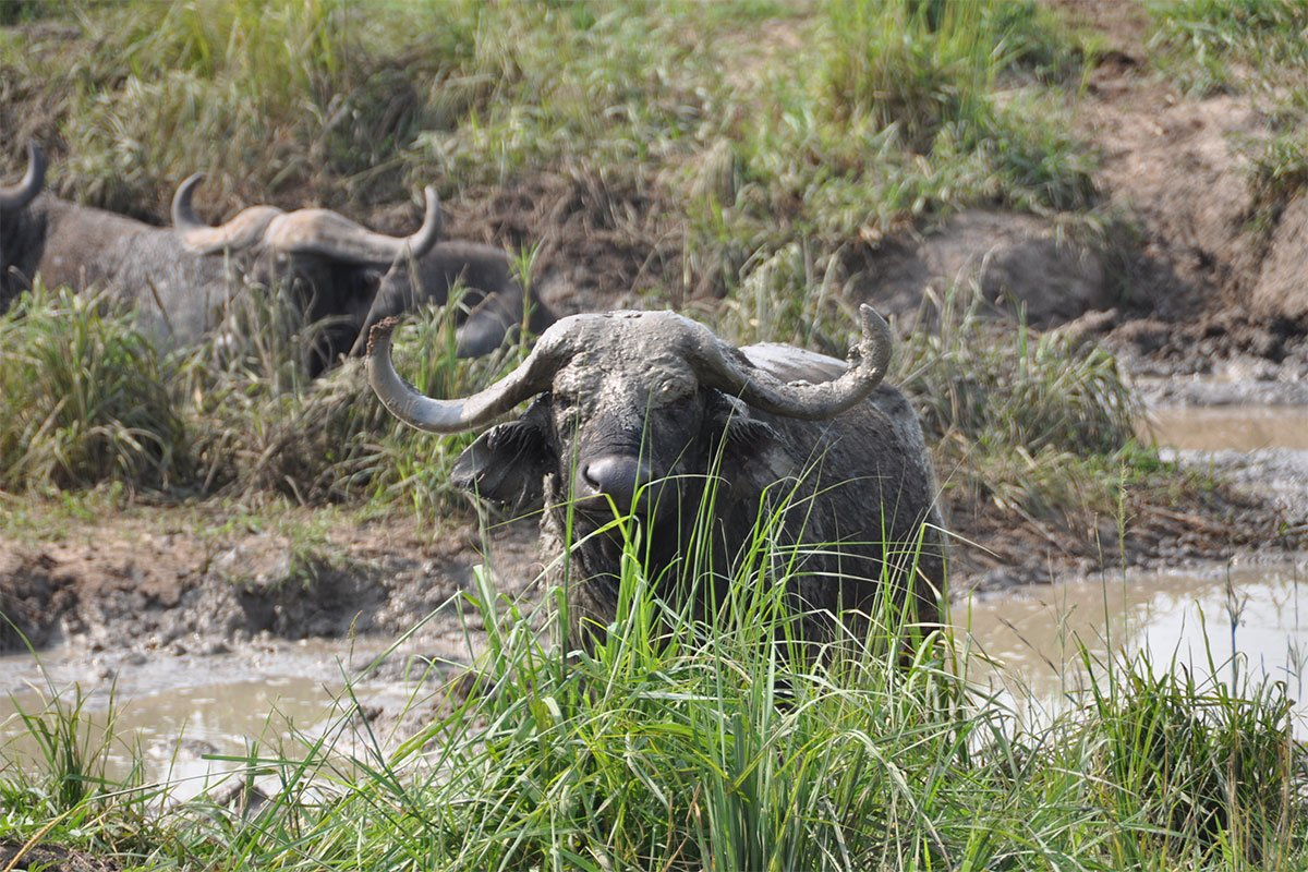 Murchison falls safari for 5 days