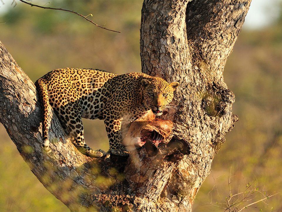 6 days Luxury Tanzania wildlife safari