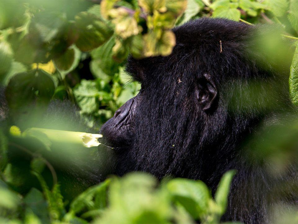 6 days Rwanda gorillas and nyiragongo volcano safari