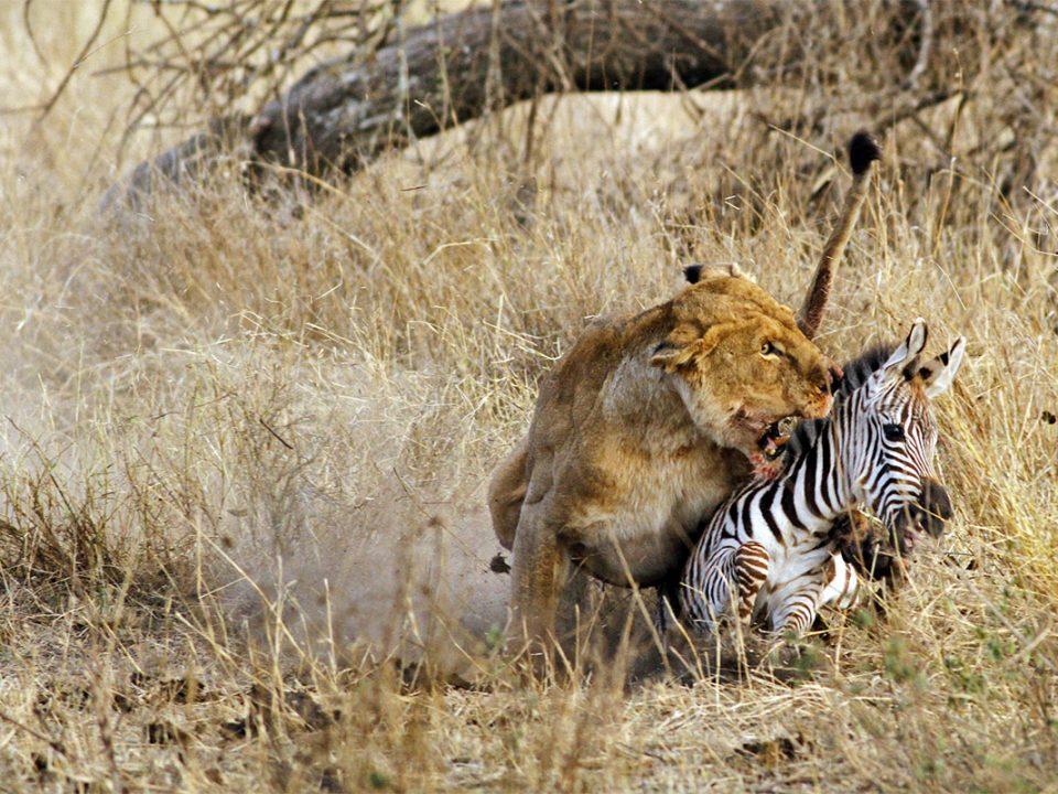 6 days ngorongoro Tanzania Africa safari