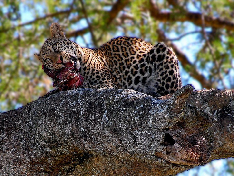 8 days Northern Tanzania safari
