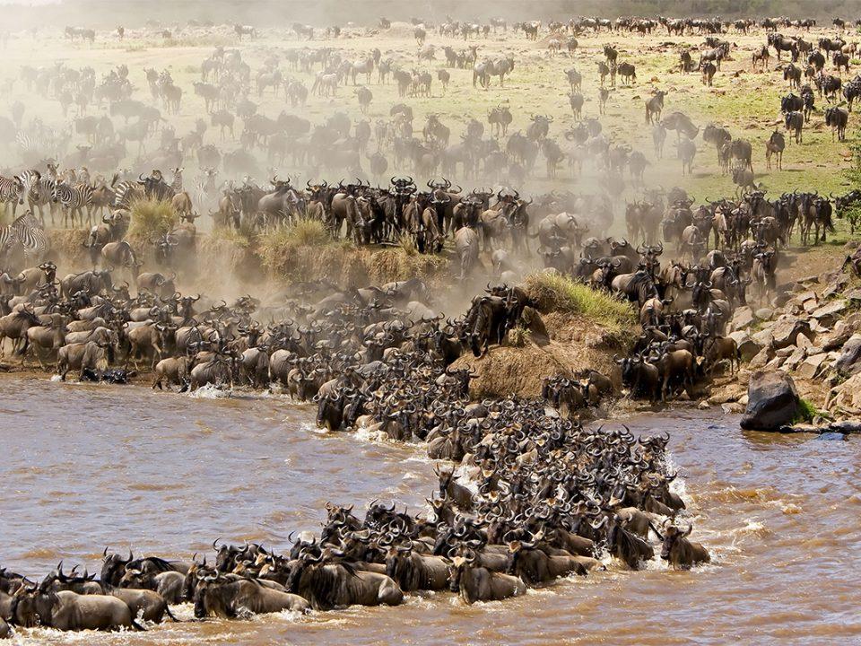 7 days Grumeti River wildebeest migration safari
