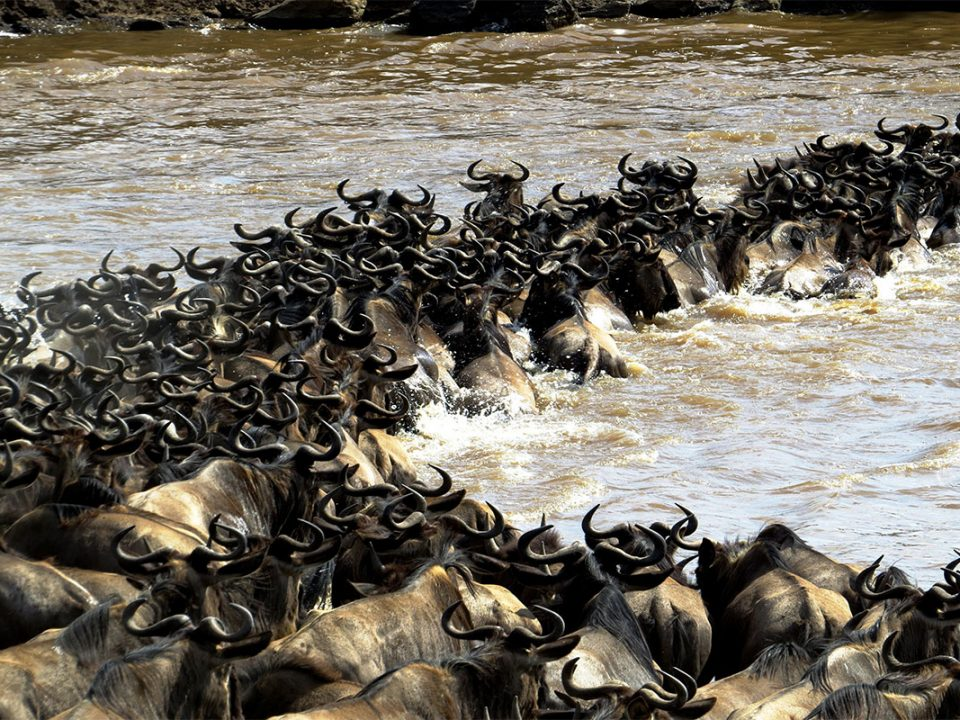7 days fly in wildebeest migration safari