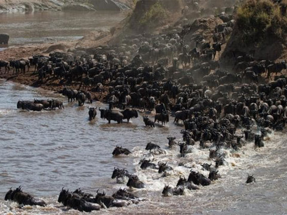 7 Days Luxury Great Wildebeest migration safari