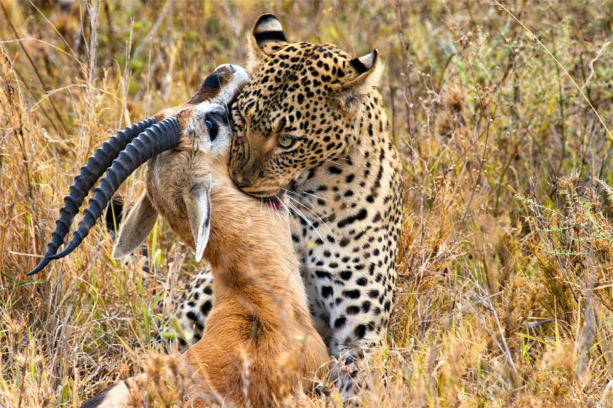 7 days Kenya sweet waters and Masai Mara safari