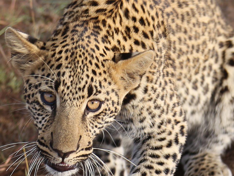 8 days Kidepo valley and Murchison falls safari