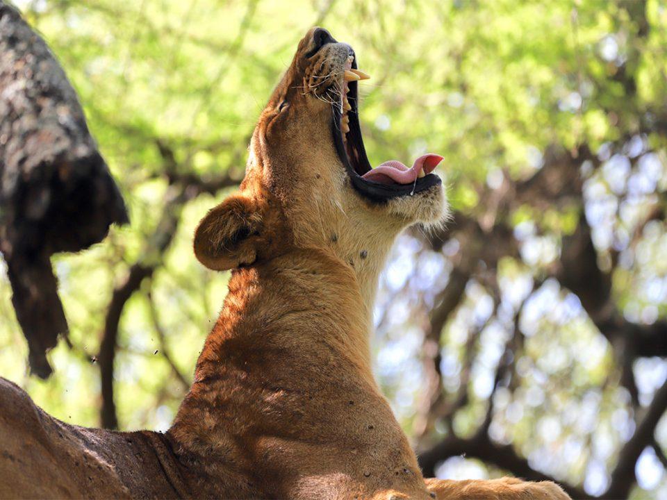 8 days Tarangire, serengeti