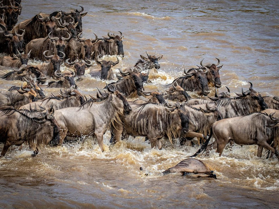 8 days Serengeti wildebeest safari