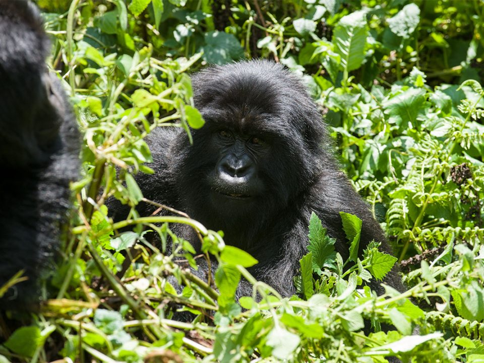 Activitites and attractions in Bwindi forest