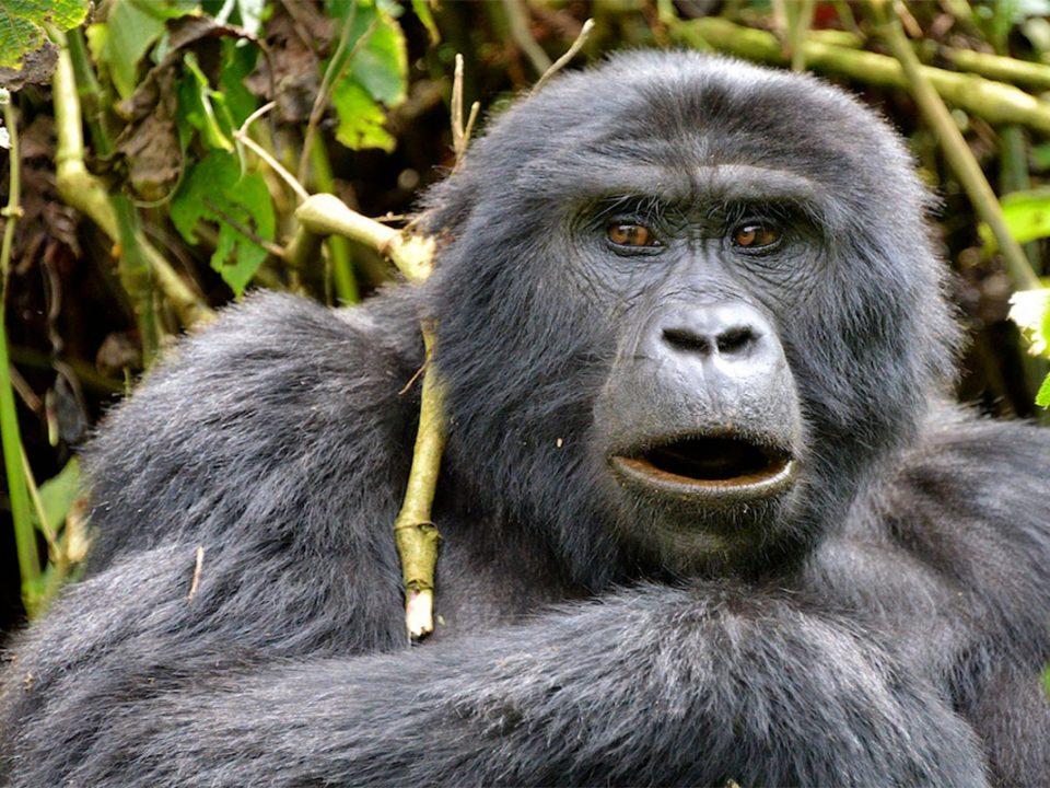 Affordable gorilla safaris to Mgahinga national park