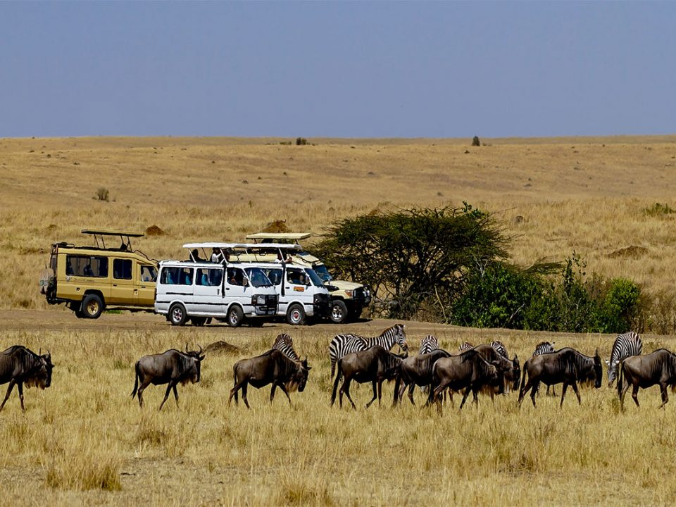 African safari travel insurance