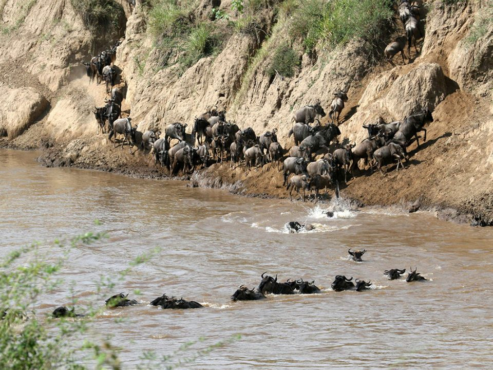 The annual wildebeest migration safari - African Destinations