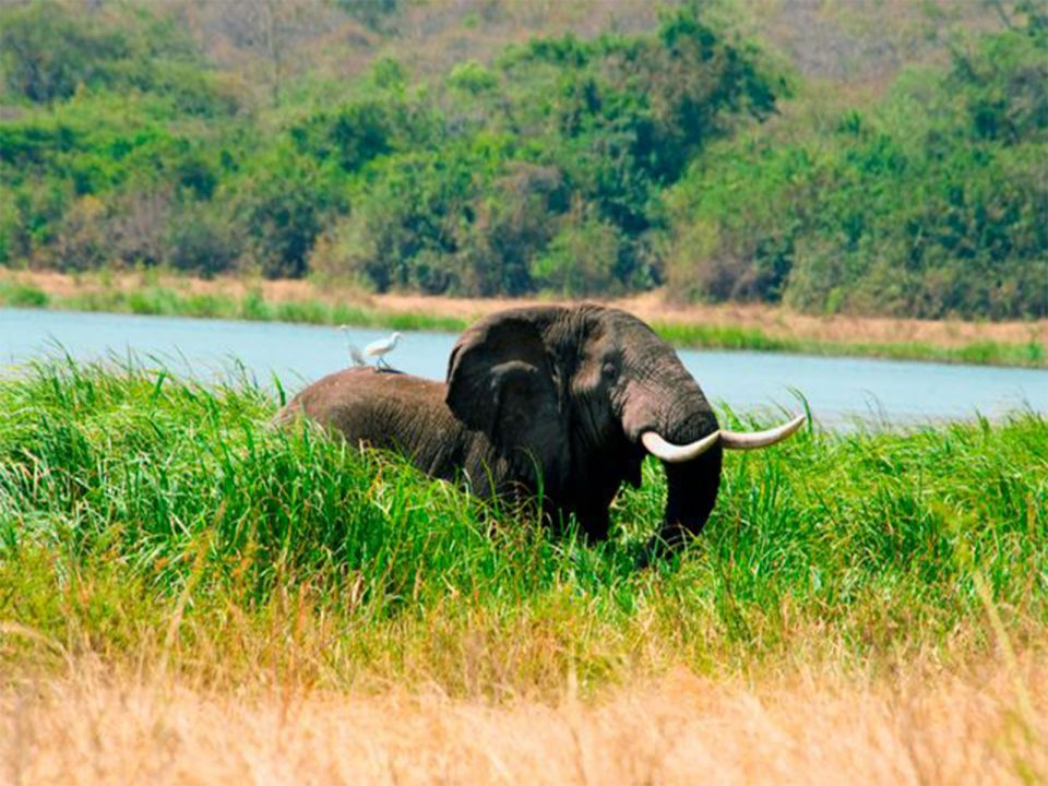 Attractions and things to do in Akagera National Park