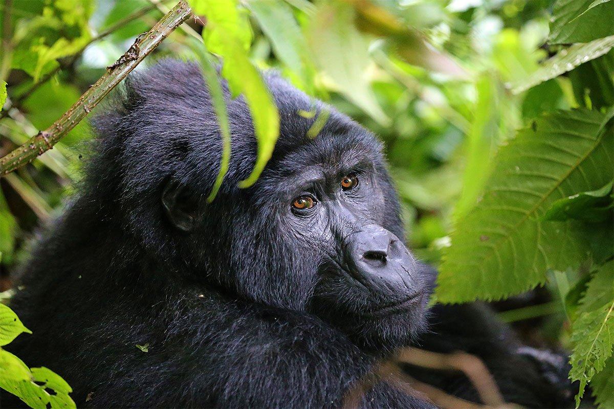Best of Africa primate safari