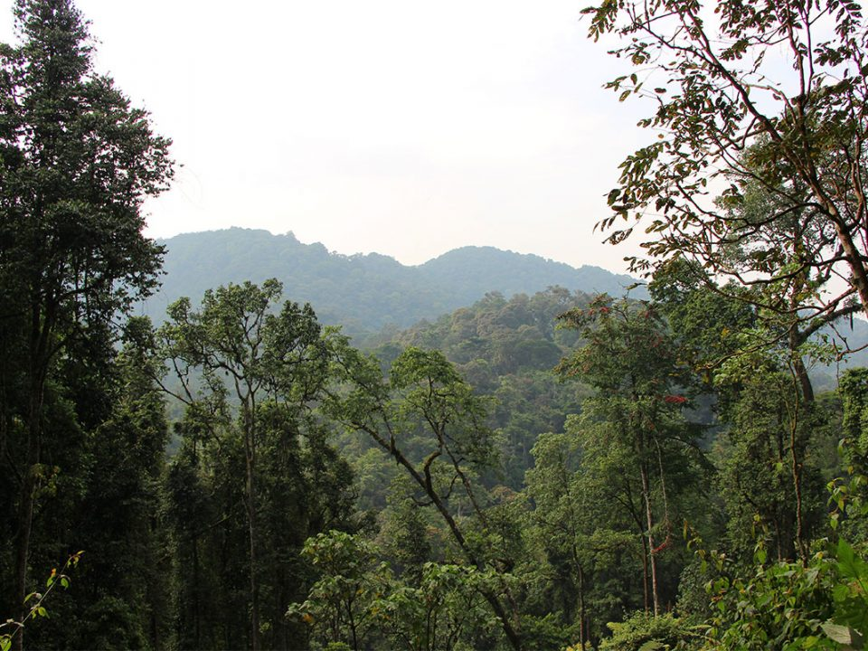 Best time to visit Bwindi impenetrable National Park