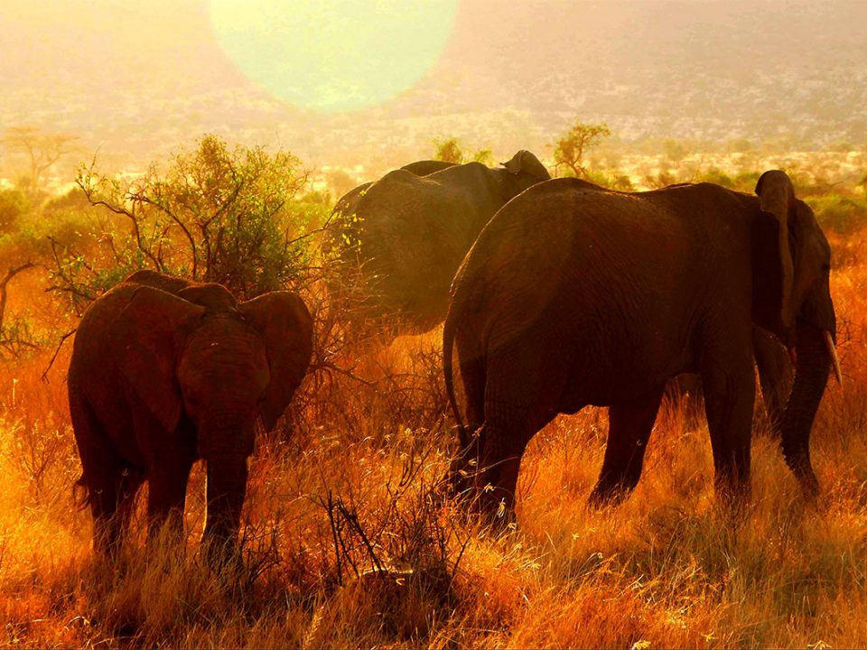Best time to go on safari in East Africa