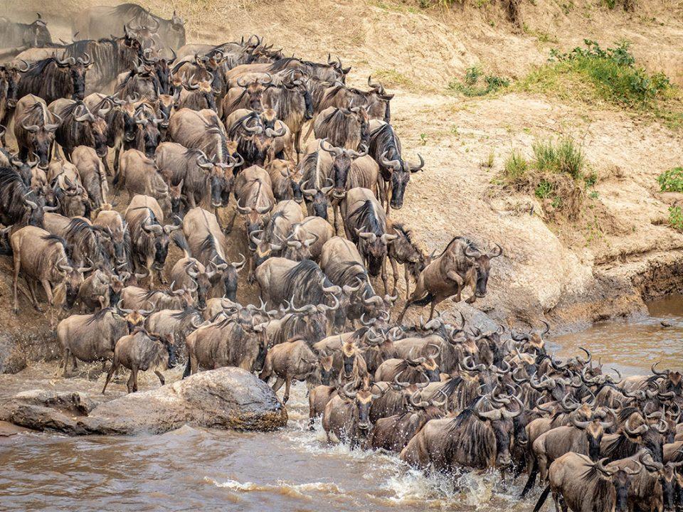 Best time to witness Masai Mara wildebeest migration