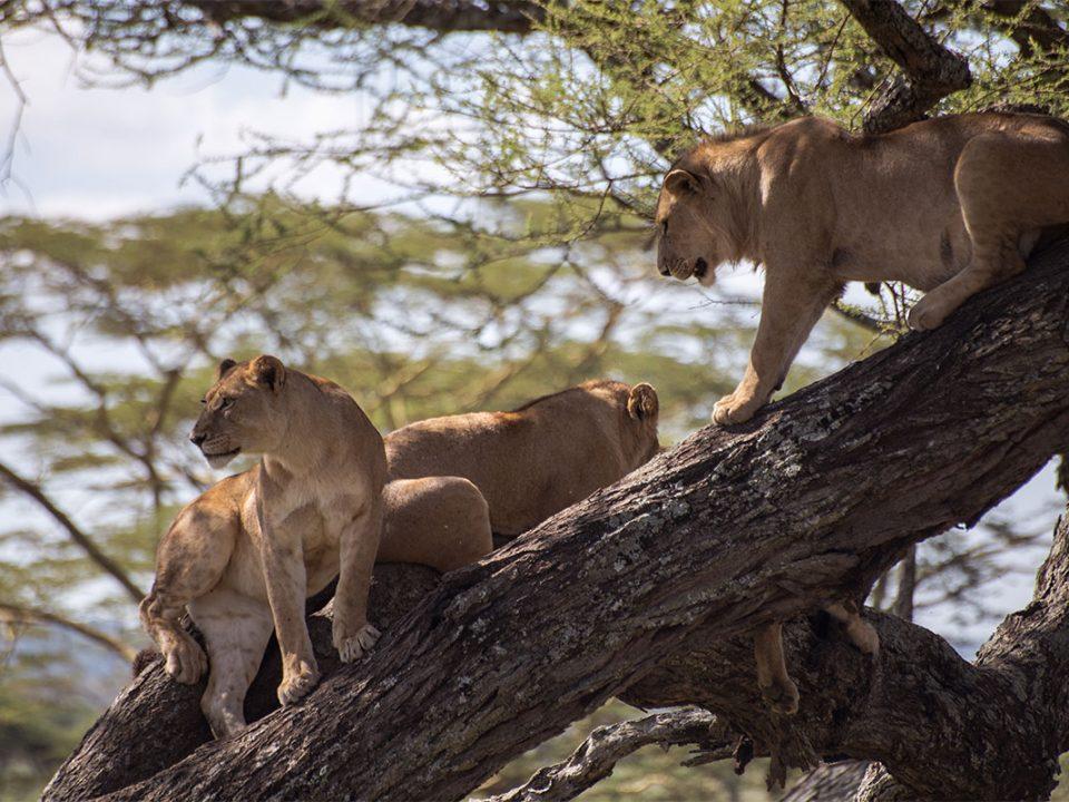 Big five safaris in Uganda