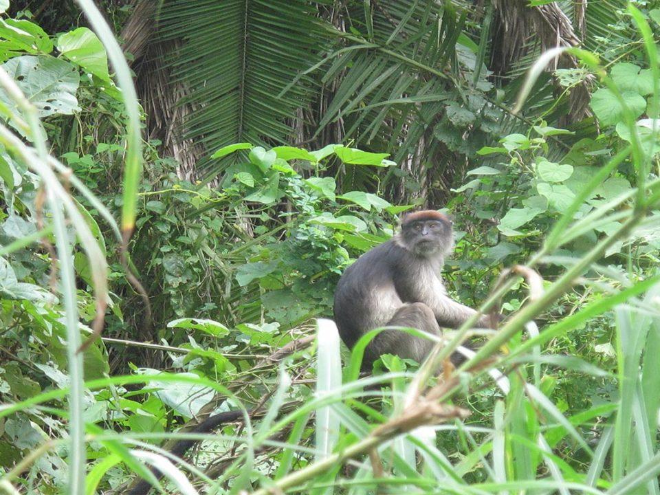 Bigodi wetland community walk,Great Adventures Uganda