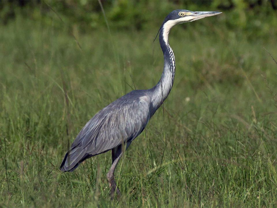 Bird checlist of Bwindi