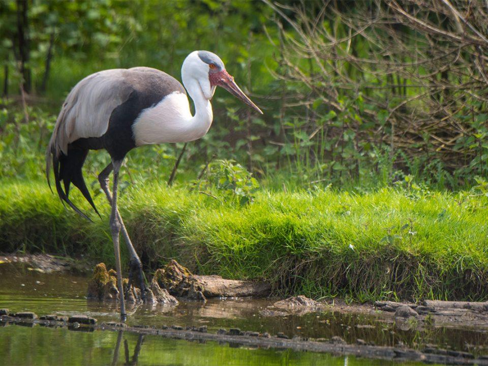 Bird watching in Kasanka National park