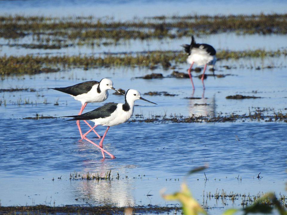 Birding on Lake Victoria shores