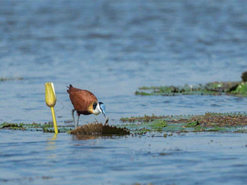 Birding trips around lake opeta