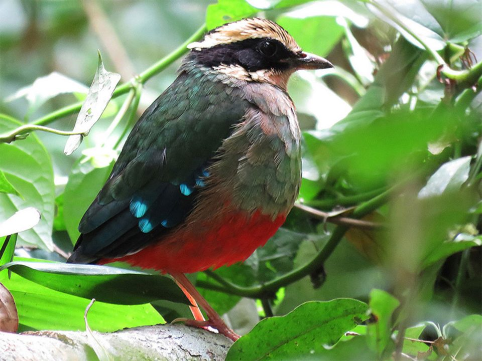 Birding trips to Kibale forest