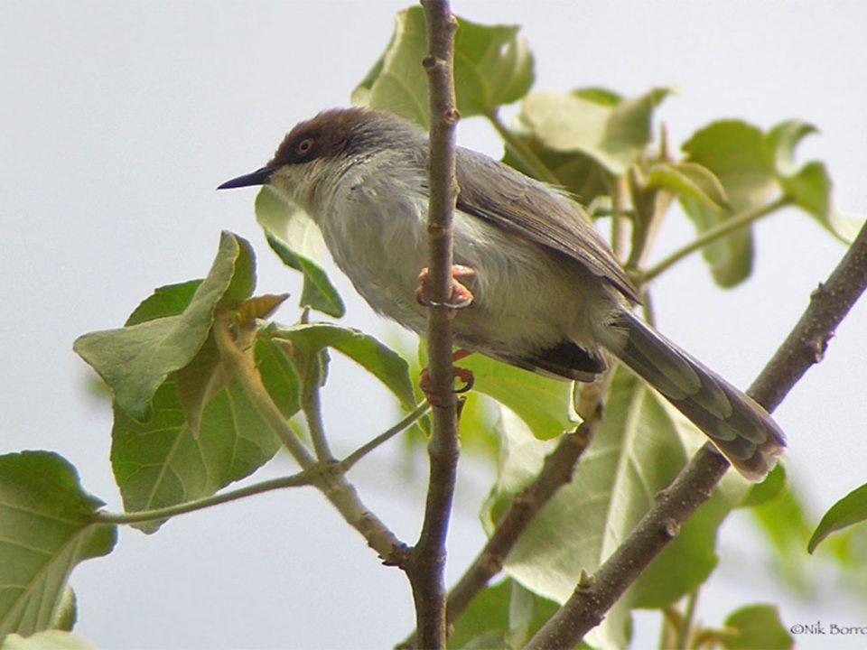 bird trips in Kafue National Park