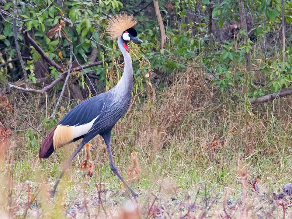 Explore birds of lake mburo