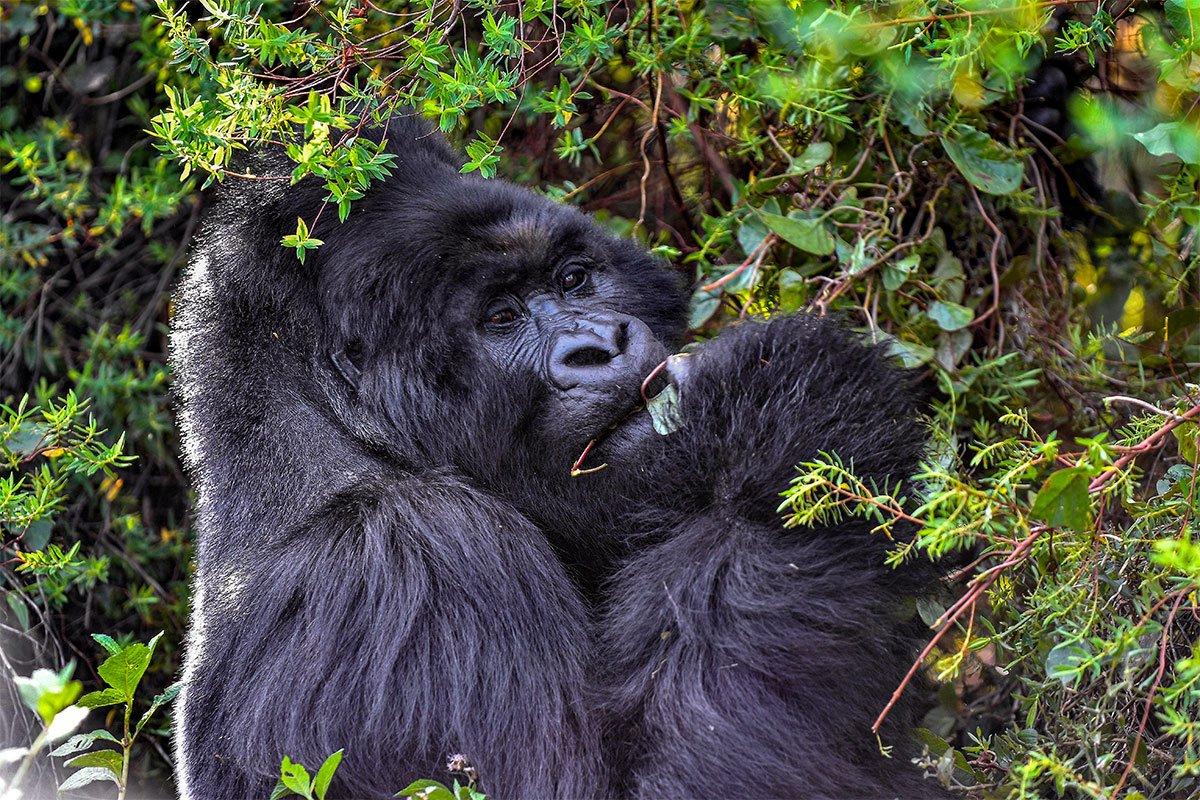 How to book a mgahinga gorilla pass