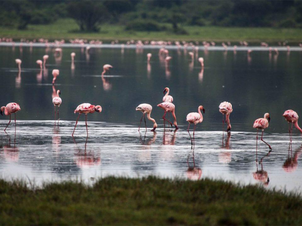 Budget birding safaris to Queen Elizabeth
