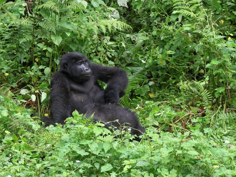 Buhoma gorilla trekking permits