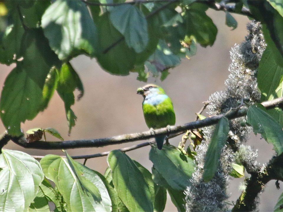 Bwindi forest birding safaris
