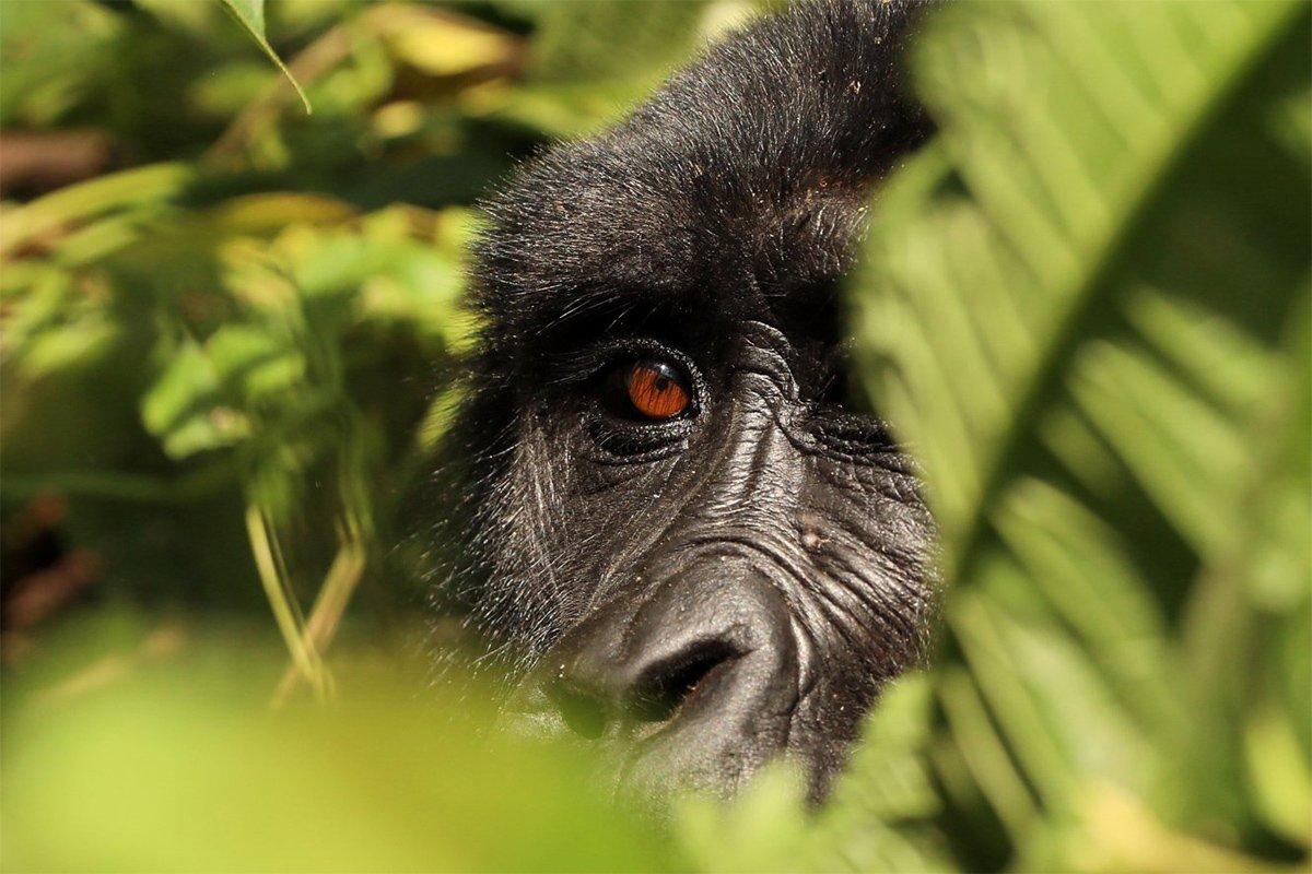 Bwindi gorilla trekking permits