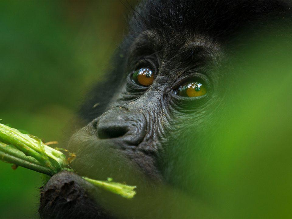 7 days Uganda budget safari